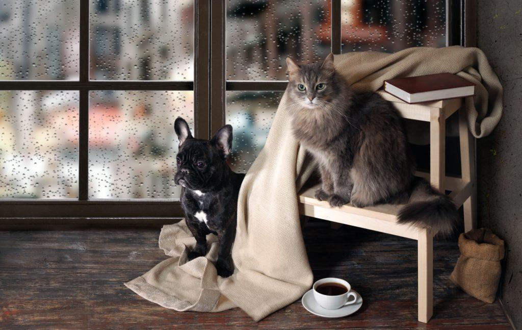 animais de estimação em casa